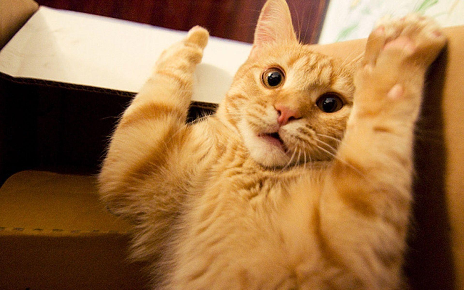 нам веселые смешные картинки про руку много