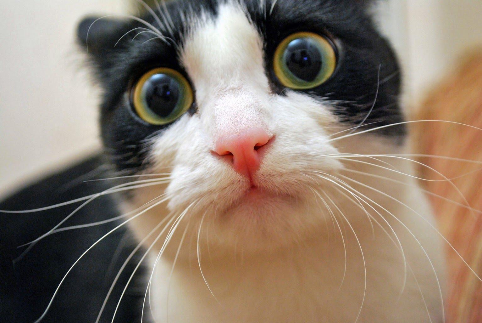 этого типа кошки фото с приколами логан разрабатывался как