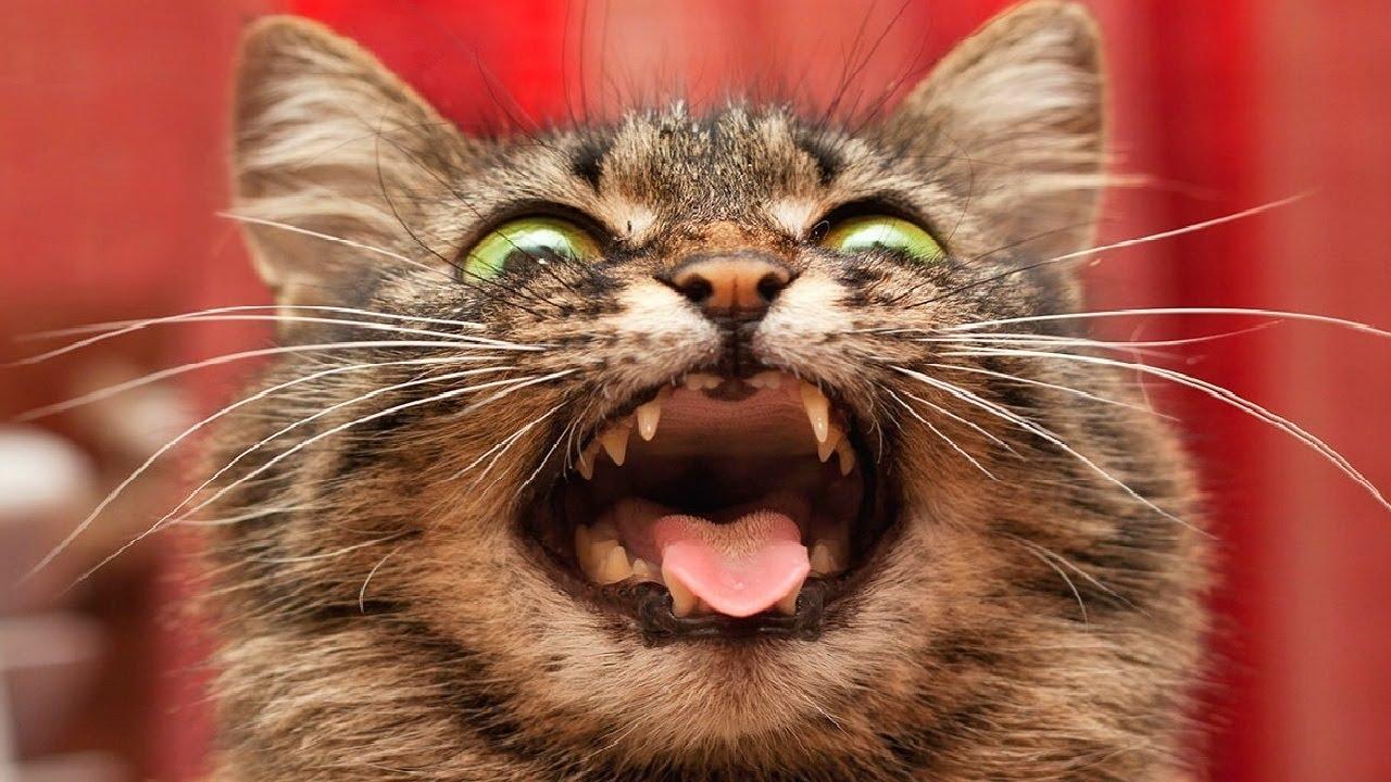 Открытку свадьбу, картинки смешной кошки