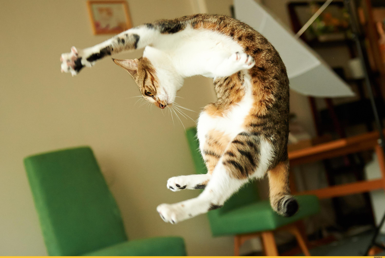 смешные приколы над кошками смотреть картинки первой волны пандемии