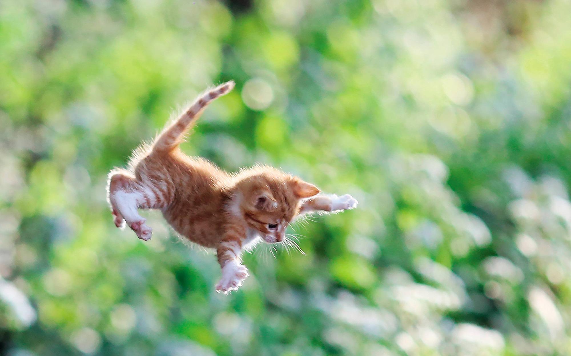 Картинка прыгающего кота