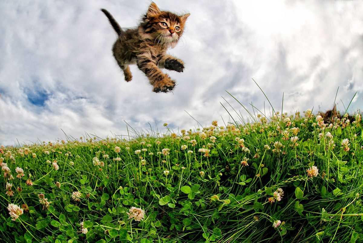 Летящие коты картинки