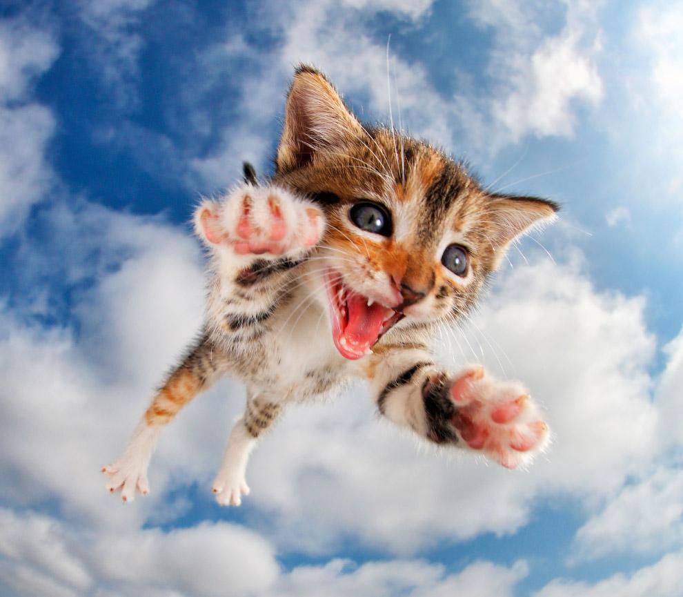 Смешные котята и кошки картинки