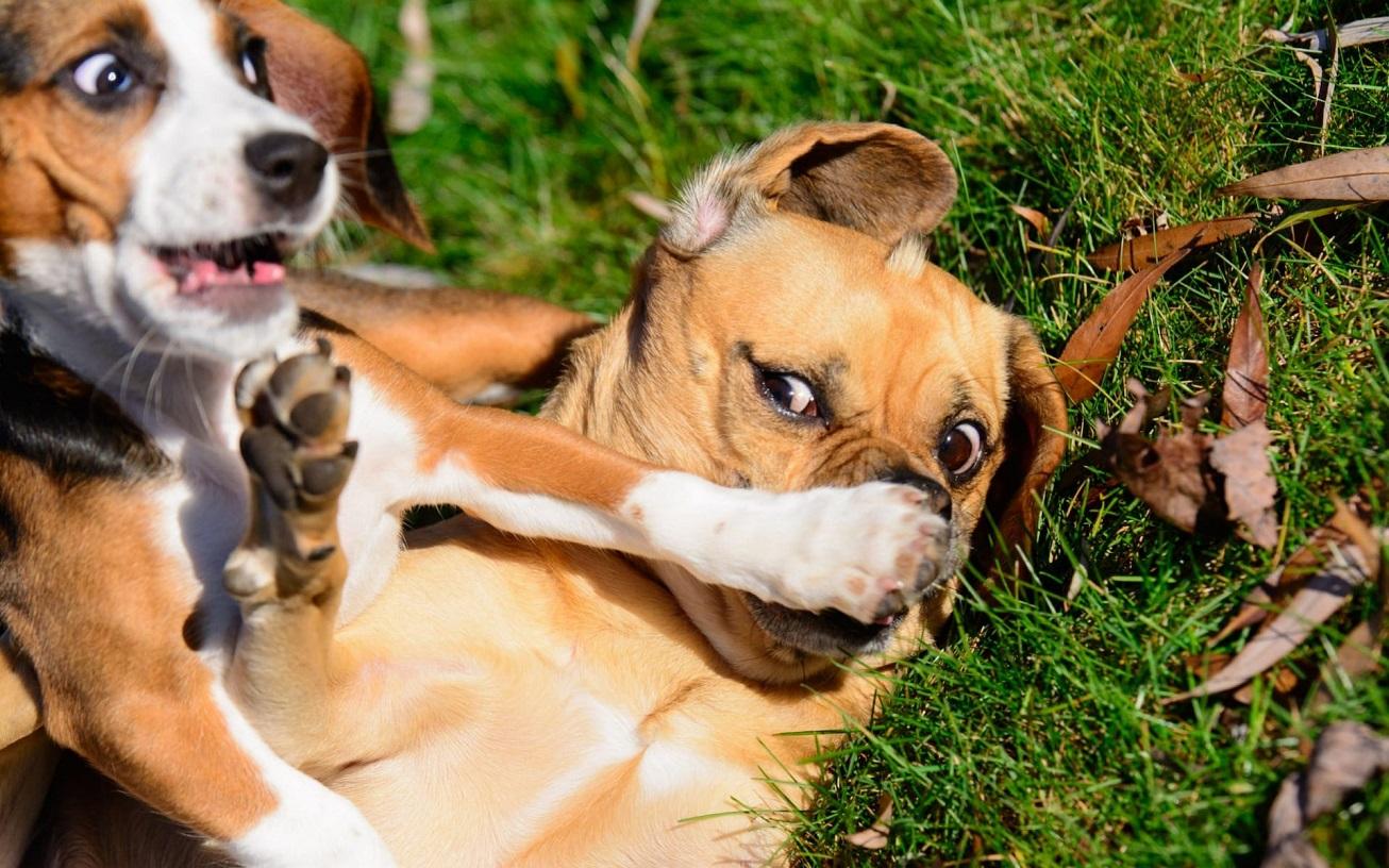 смешные картинки животных фото приколы говорилось ранее