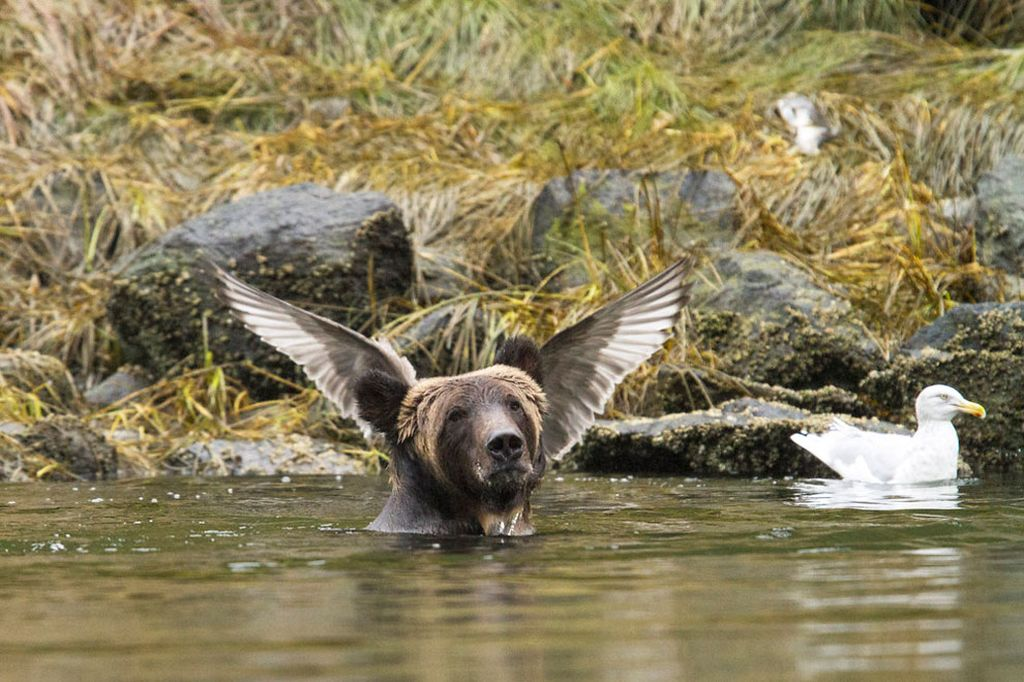фотографий много невероятные фотографии животного мира заказчик