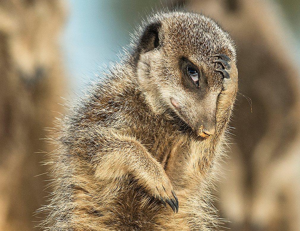 чудесные животные фото фолловеров