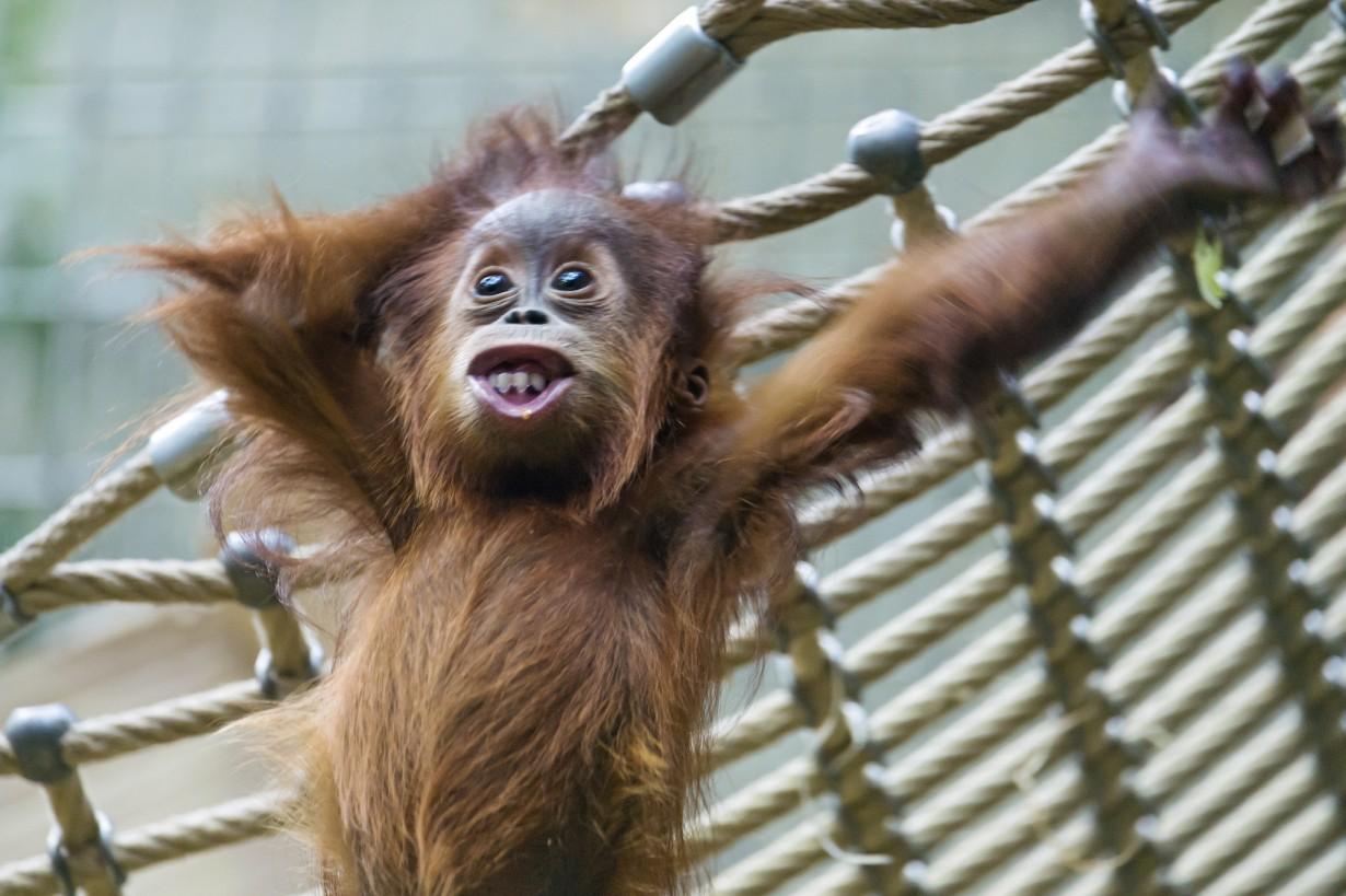 Прикольные картинки смешные с животными, четкие картинки смешные