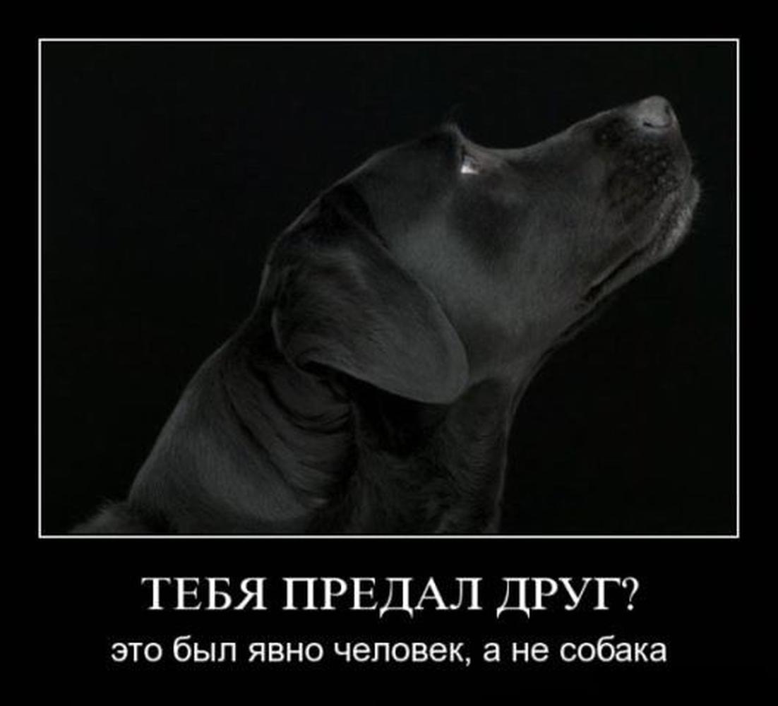 прошлых демотиваторы про собак цитаты прекрасно понимают