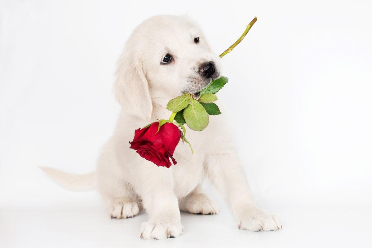 Картинки щенята с цветами