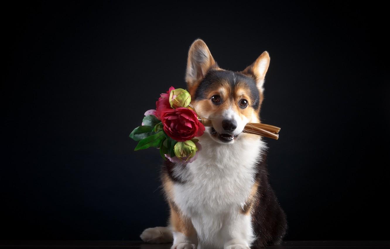 Открытка собачка с цветочком