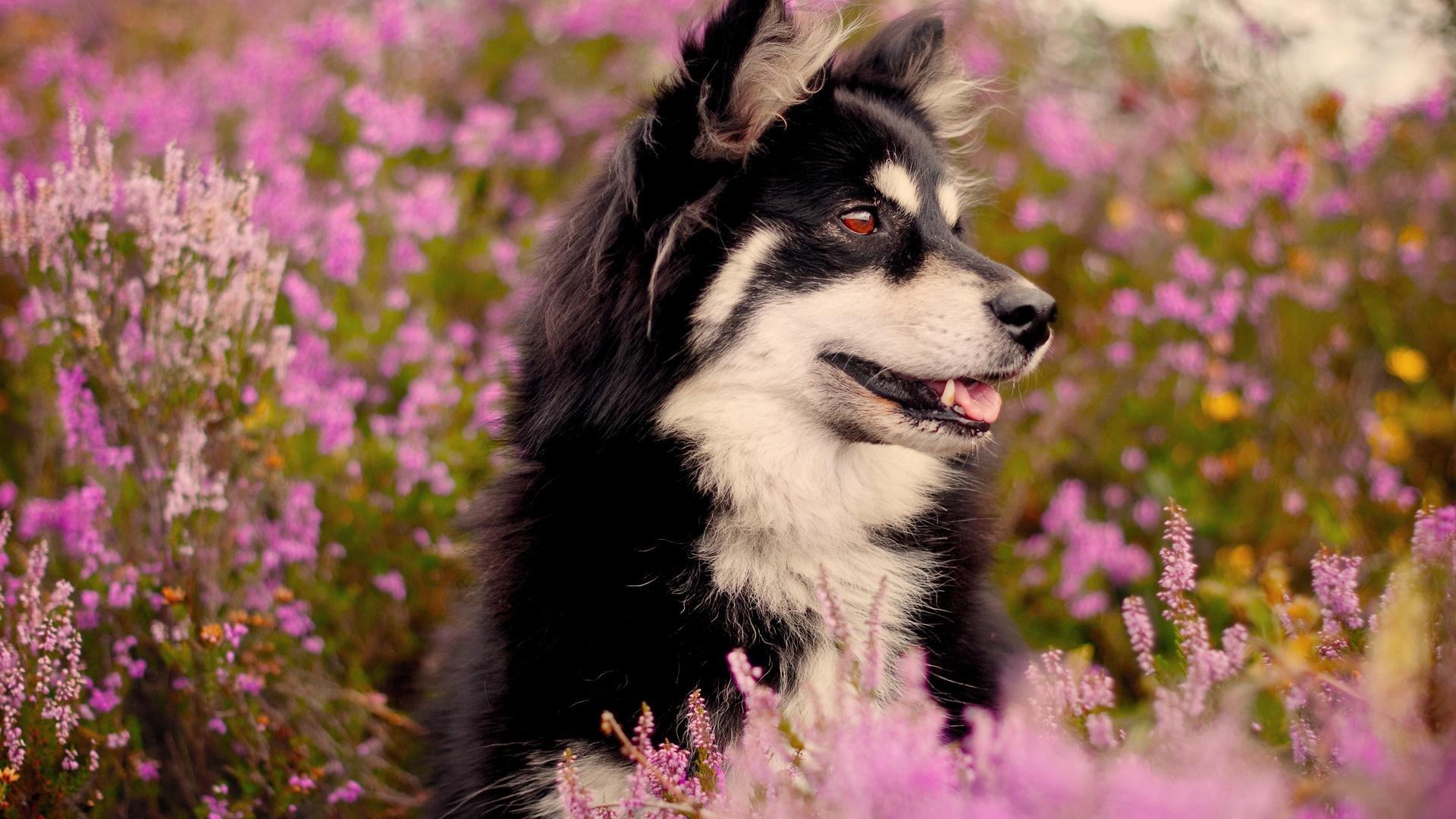 Картинки животными и цветами