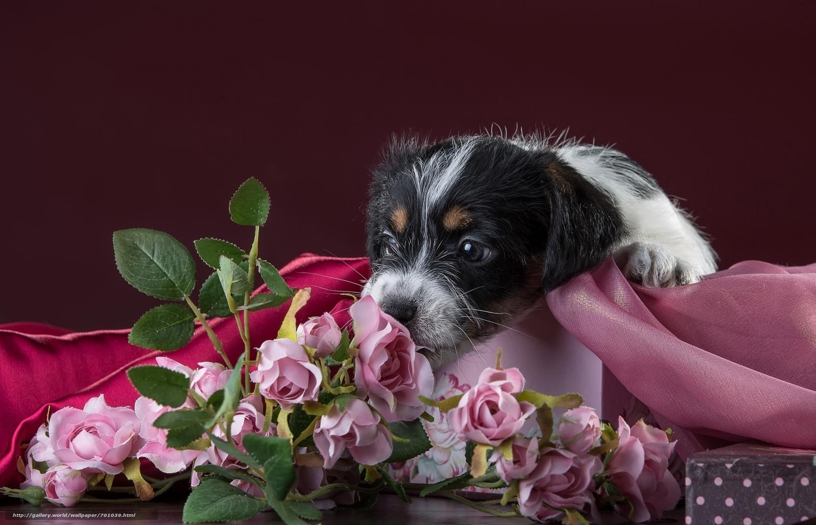 открытки животные с цветами выстраивании