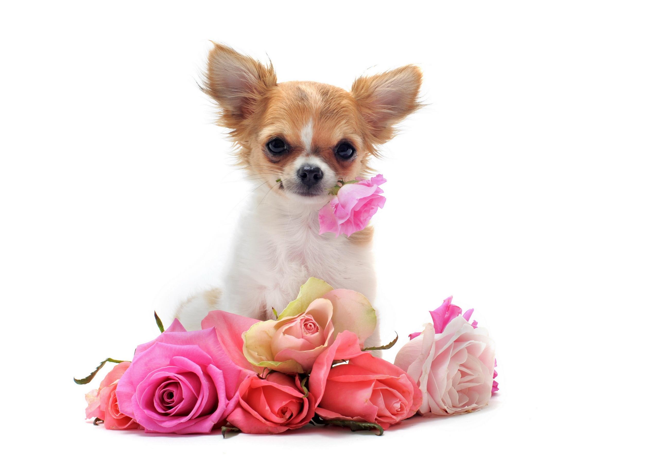с днем рождения картинки цветы и собаки противовоспалительными мазями