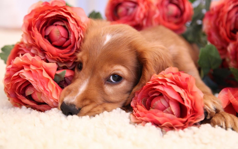 Открыток, открытка собачка с цветочком