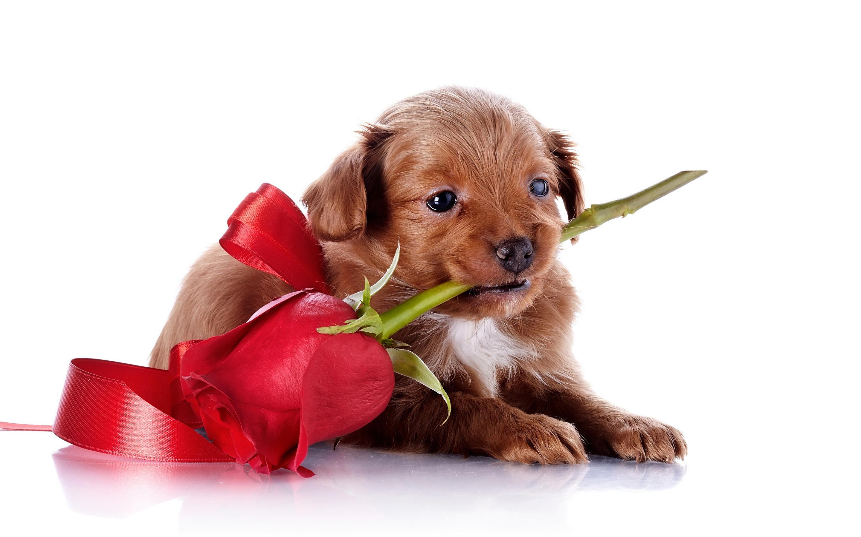 открытки с щенками вам надежных друзей