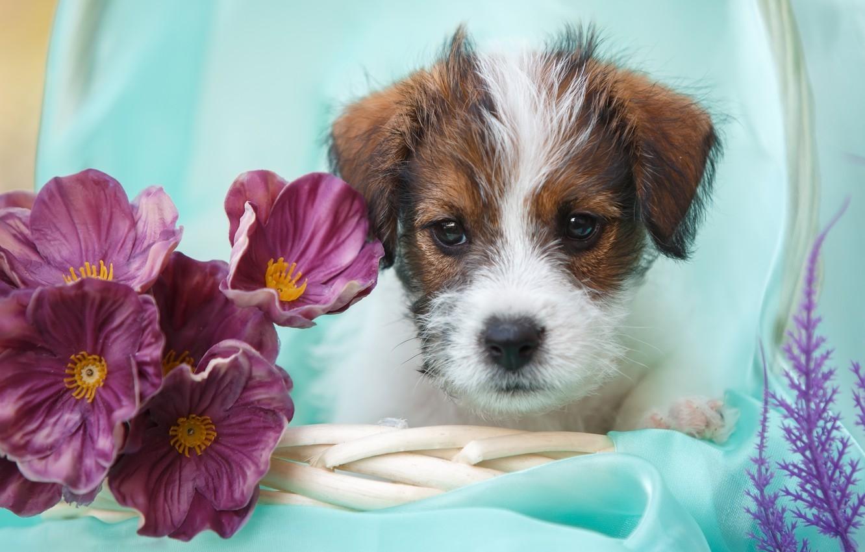 Собаки с цветами картинки, именины