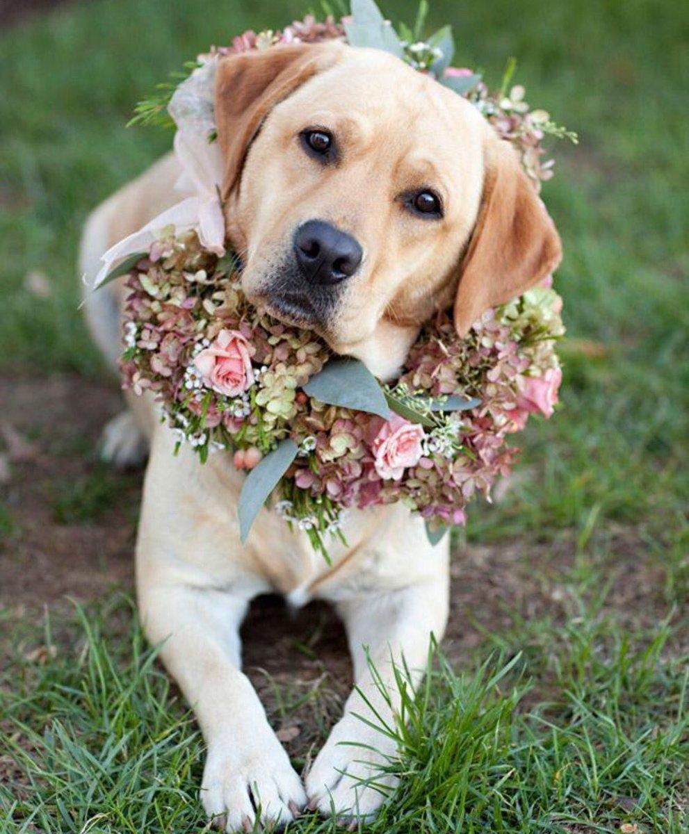 розы картинки с собаками ты, спасибо вам