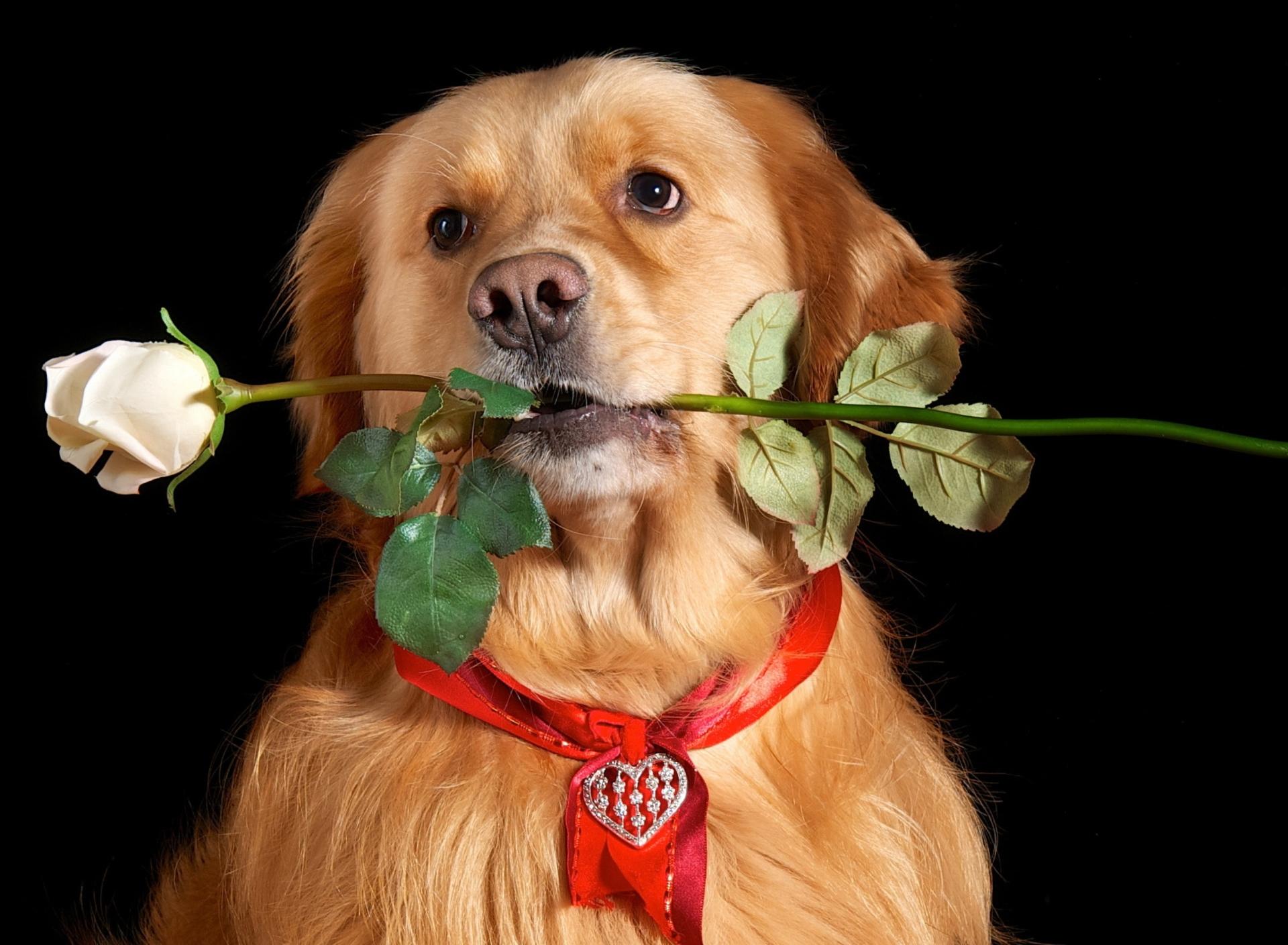 Открытка на день рождения женщине с собаками, для