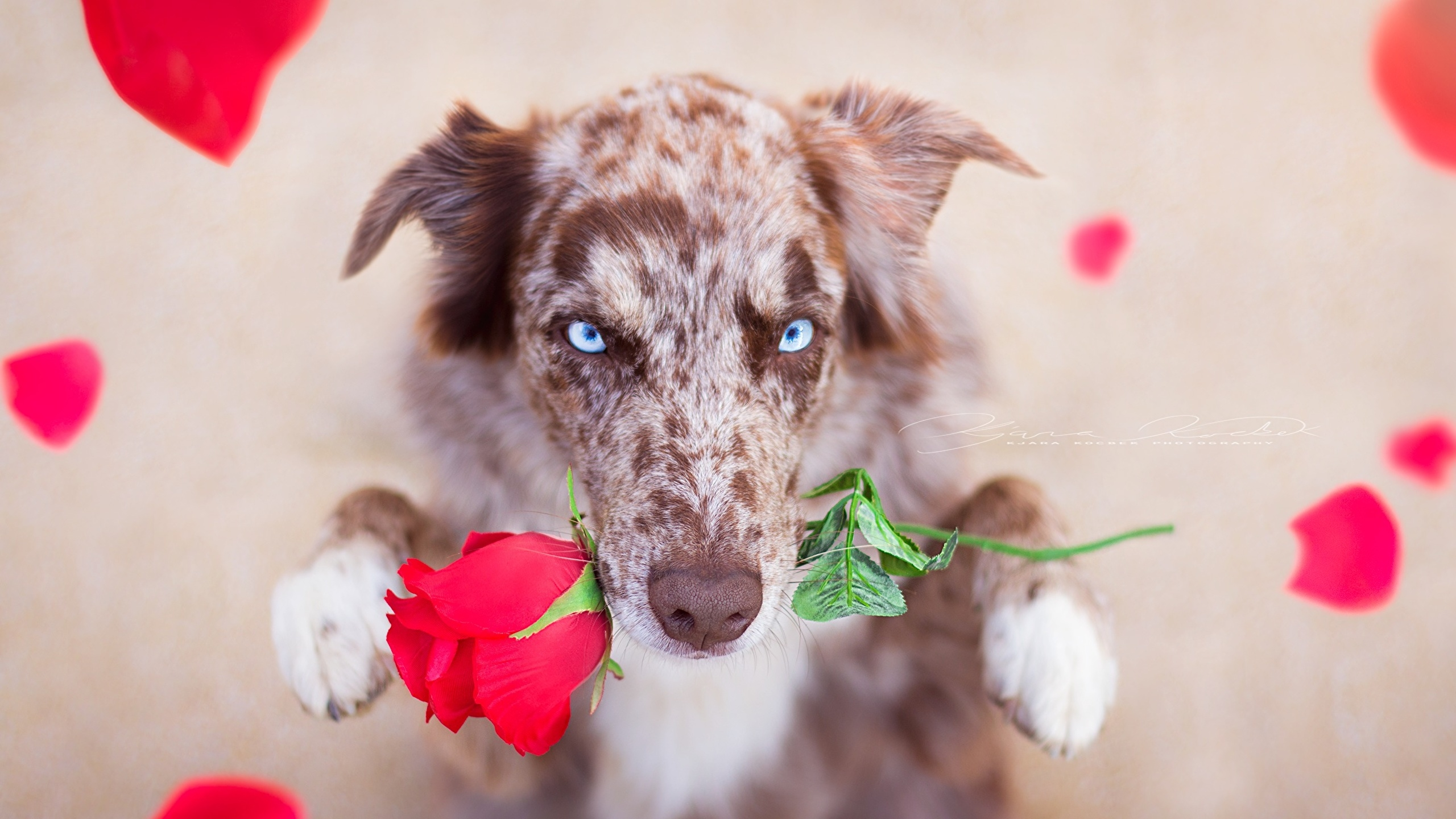 густав щенок с цветами в зубах фото выполнение