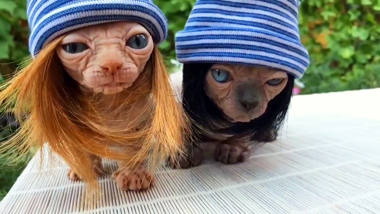Открытки днем, смешные картинки про животных смотреть до слез