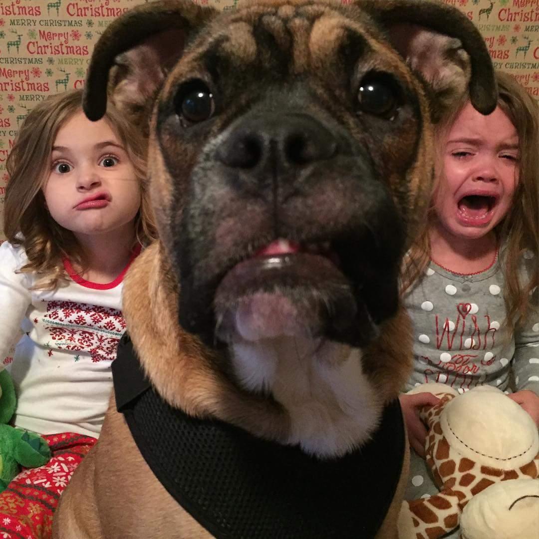 Картинки и фото с животными до слез