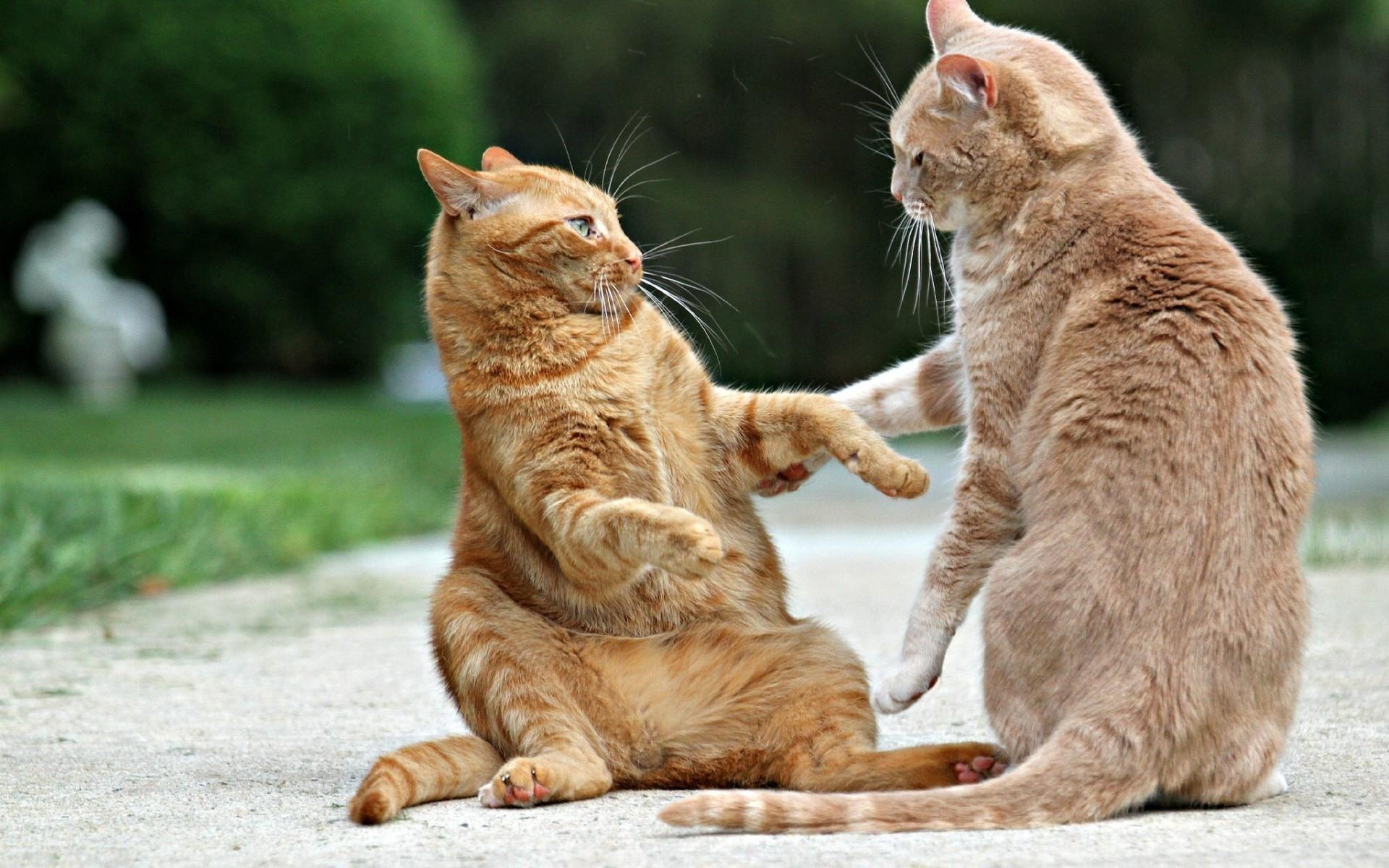Смешная картинка с кошкой