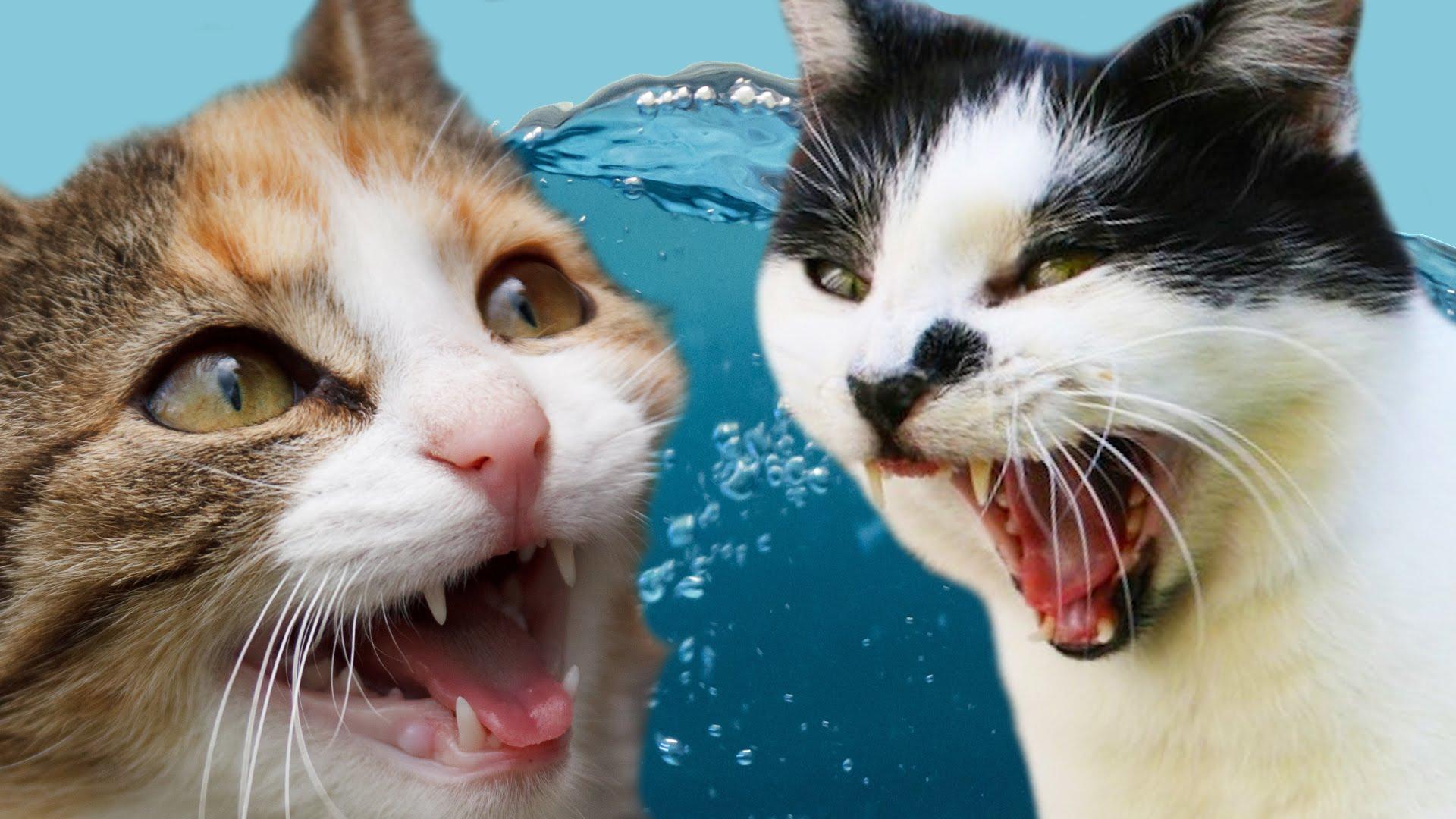 Картинки видео смешные котики