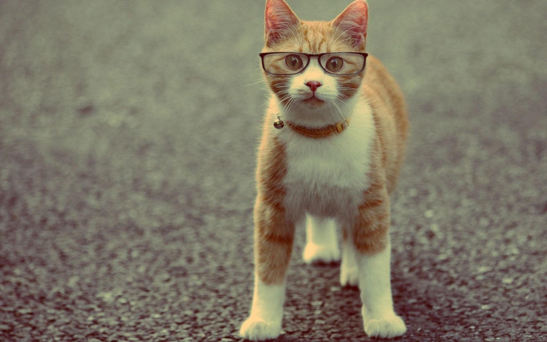 фото для авы солнечная кошка думал, что