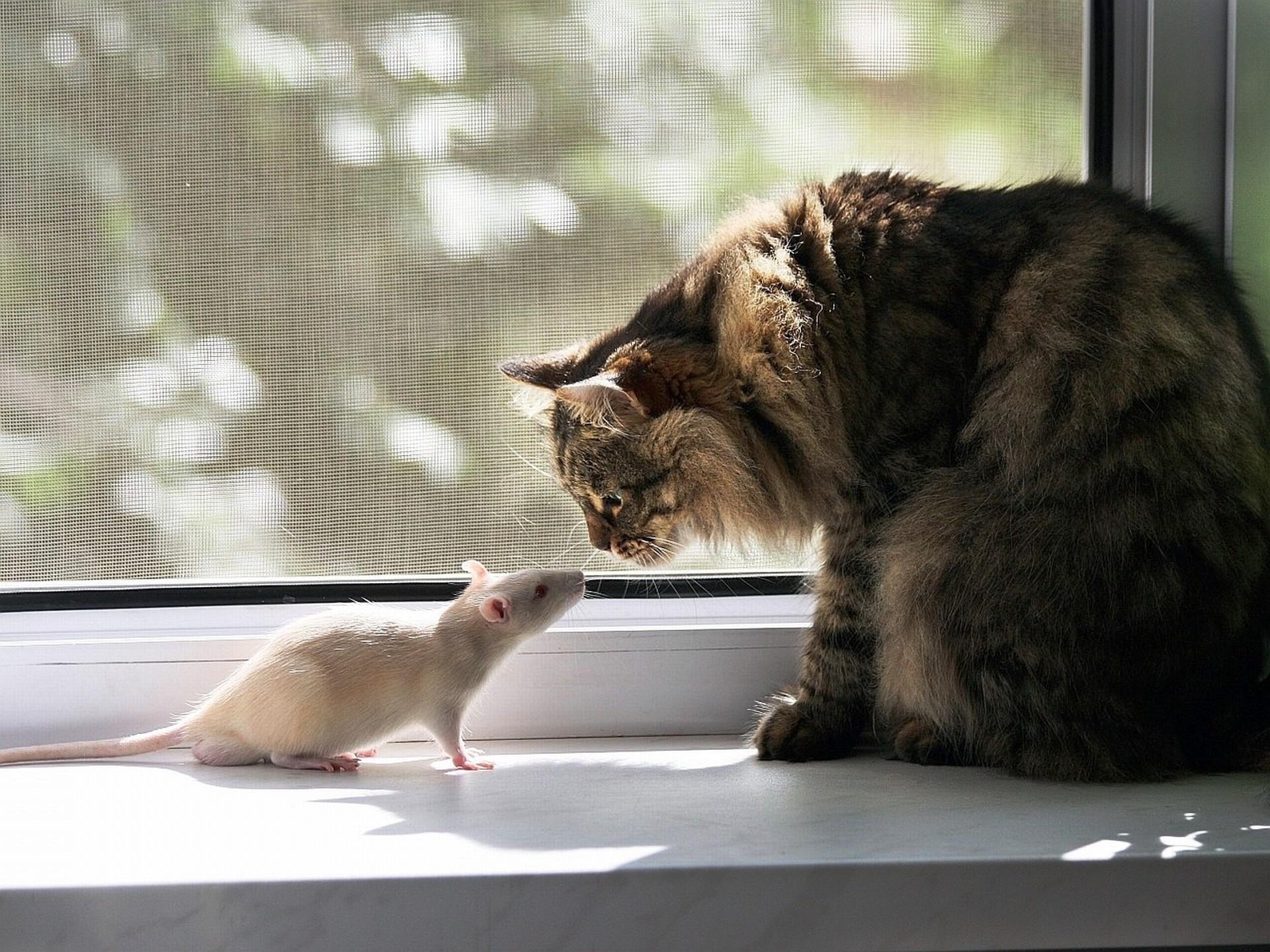 лучшие прикольные картинки с котами работает