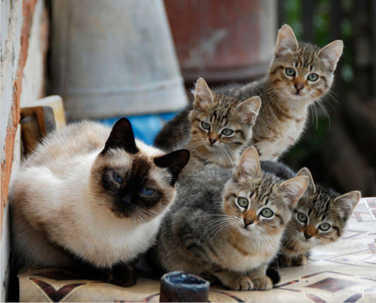 Смешные картинки по кошек, алисе годика