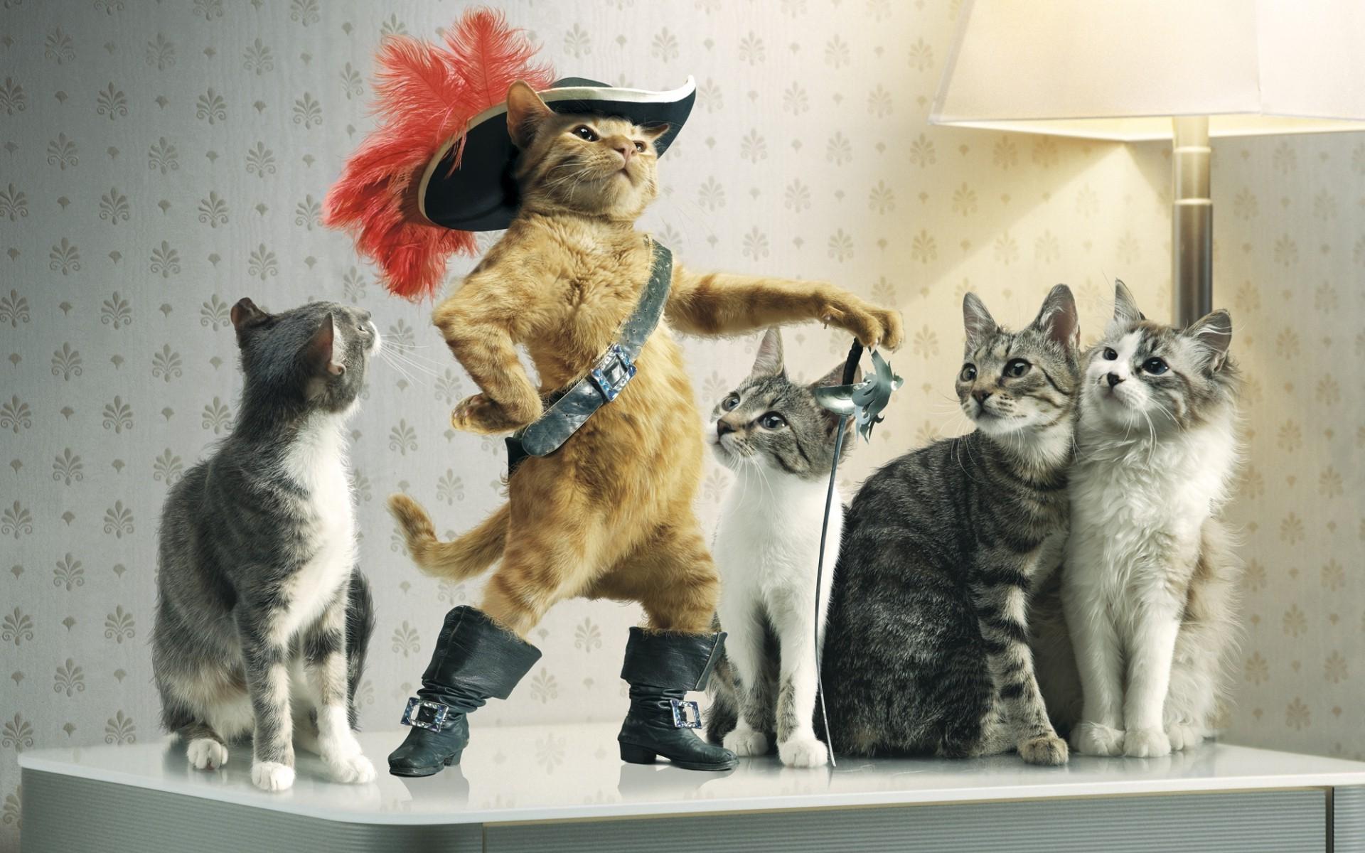 Смешные картинки кошках