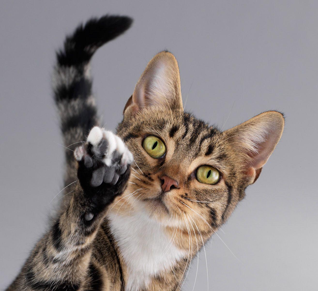 Подборка смешных фото кошек