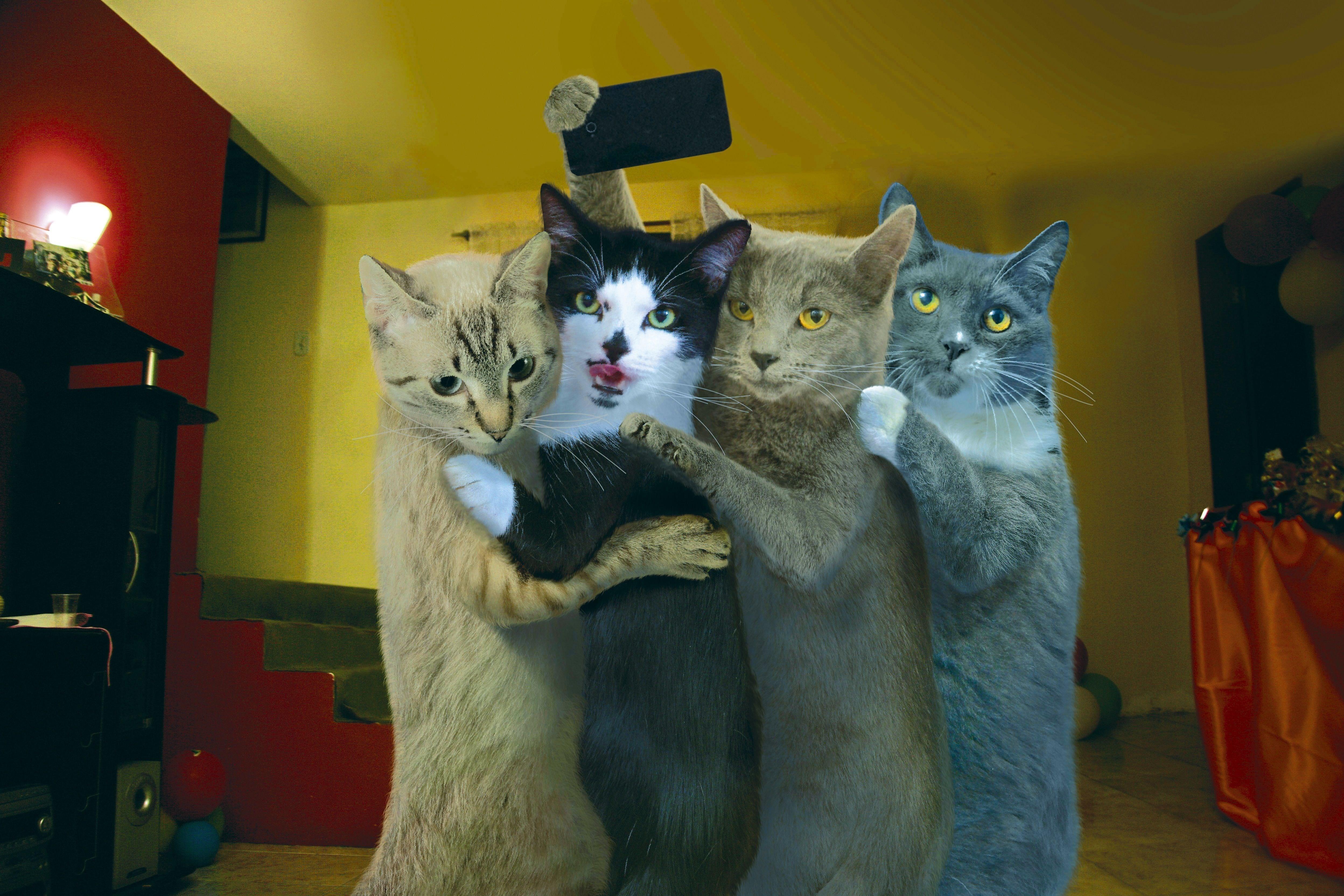 прикольные картинки с кошачьими только