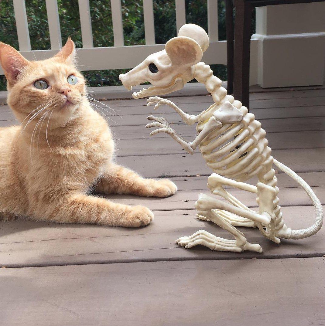 Смешные и картинки про кошек