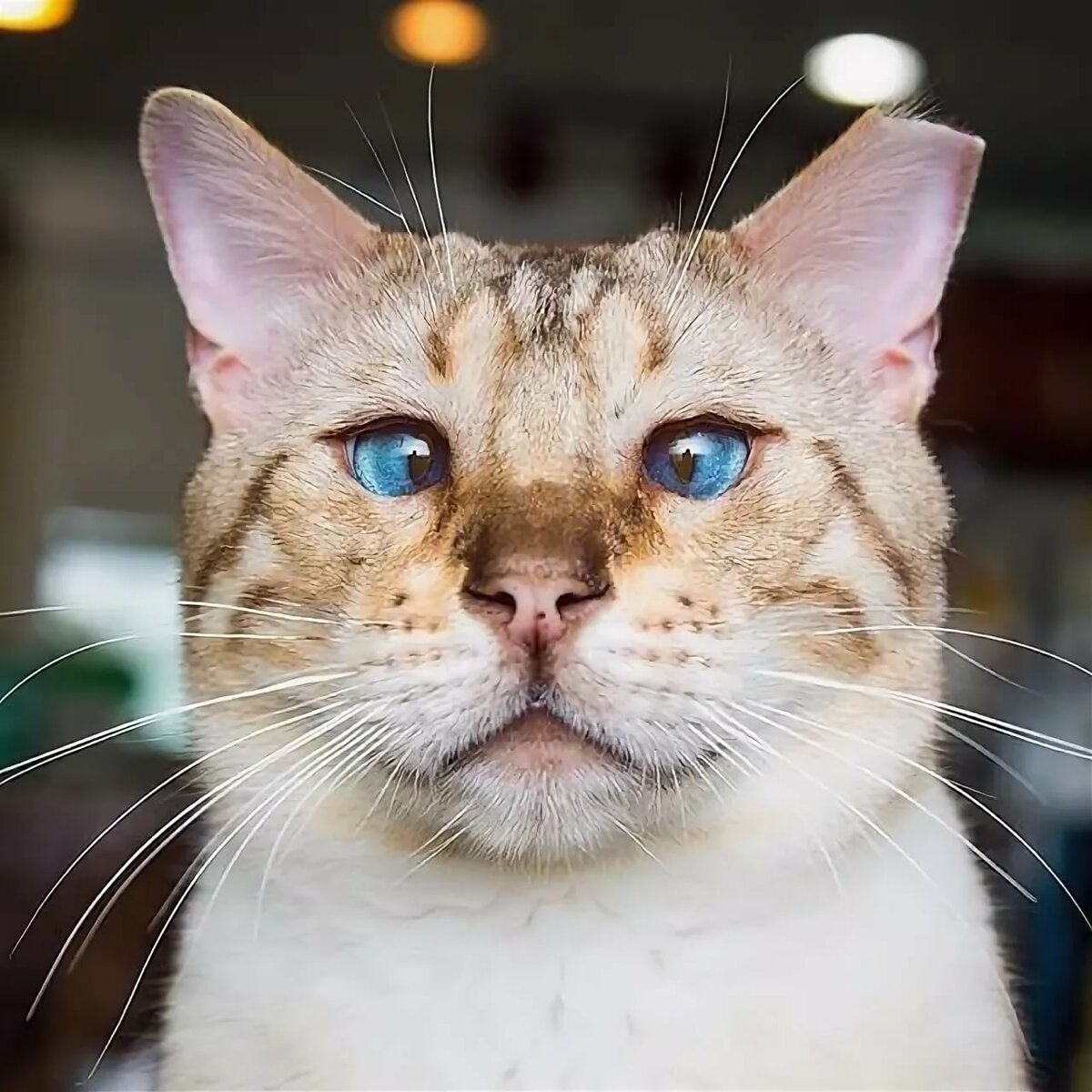 Открытка, прикольные картинки котами фото
