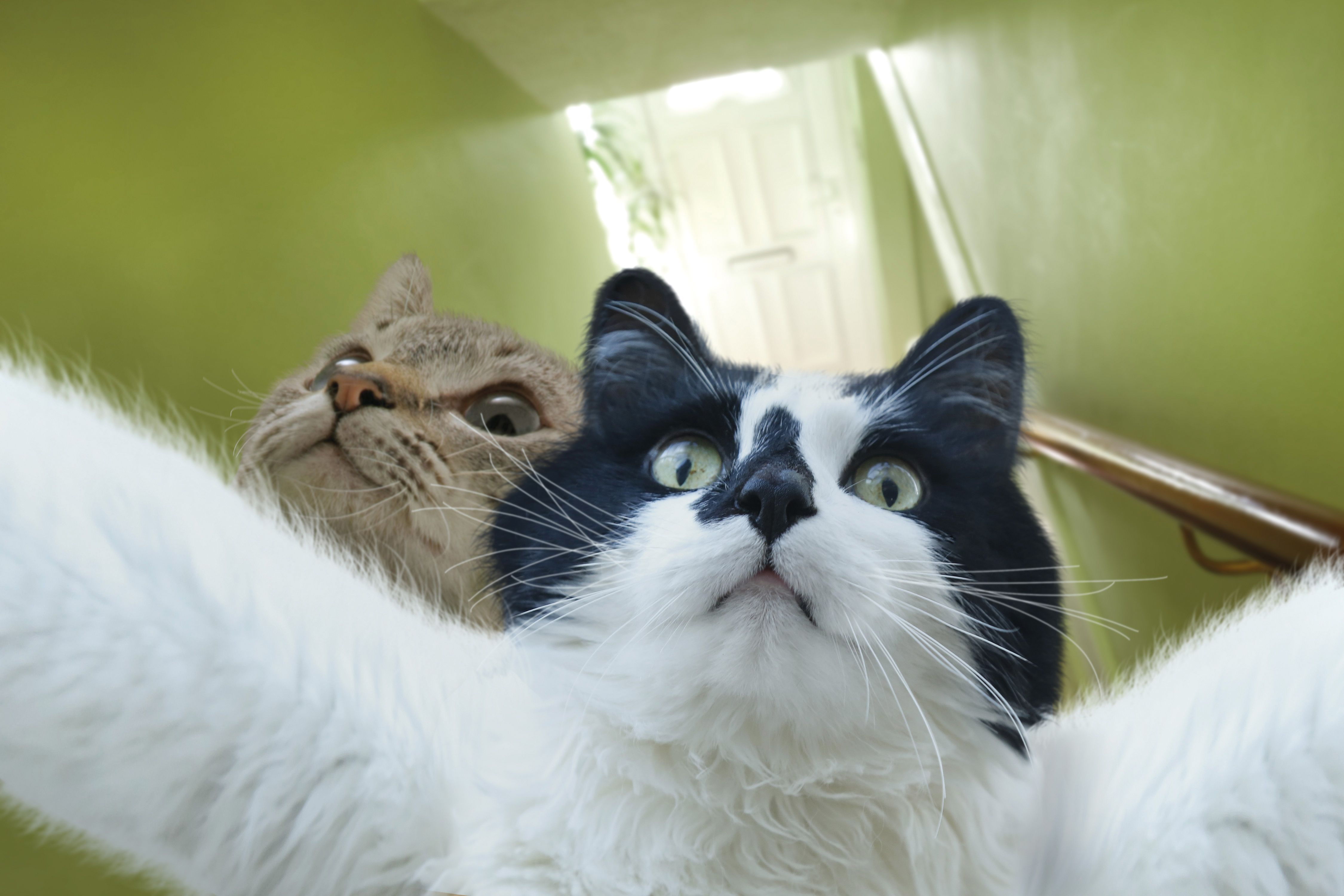 Смешные фото котов в картинках