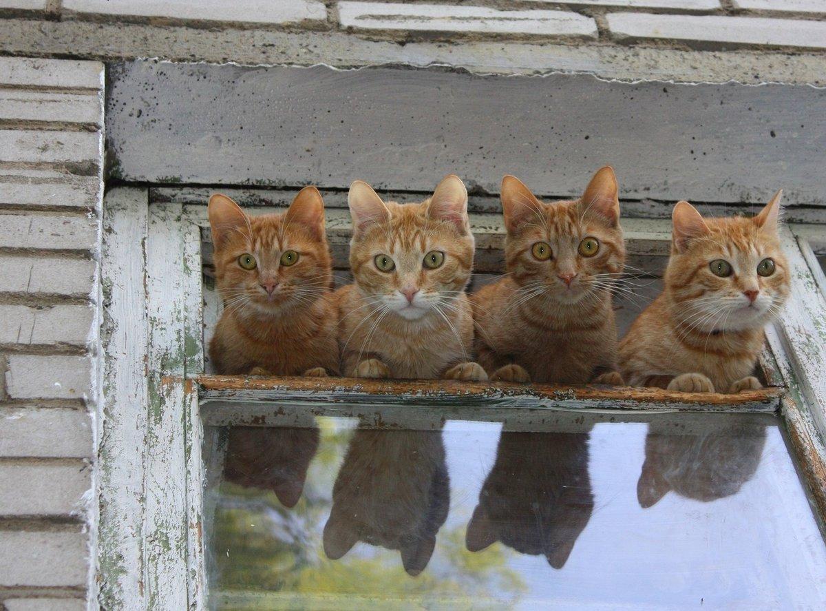 какое-то коты смешные картинки приколы товар