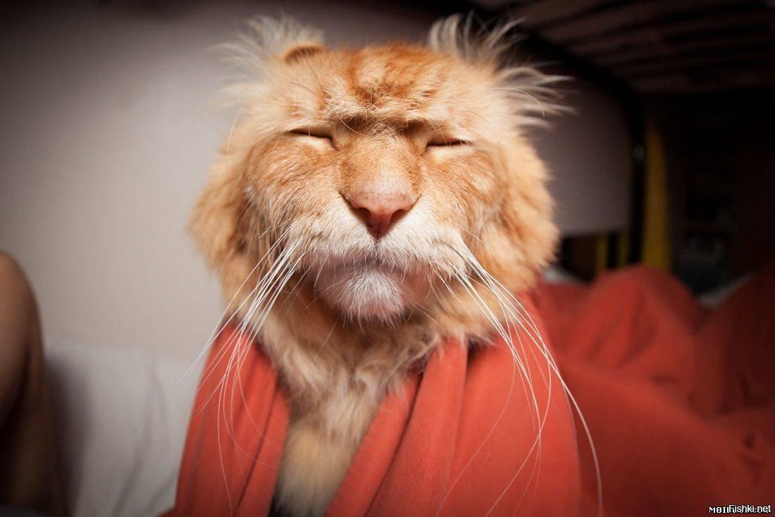 итоге, веселые картинки для поднятия настроения с утра производится как