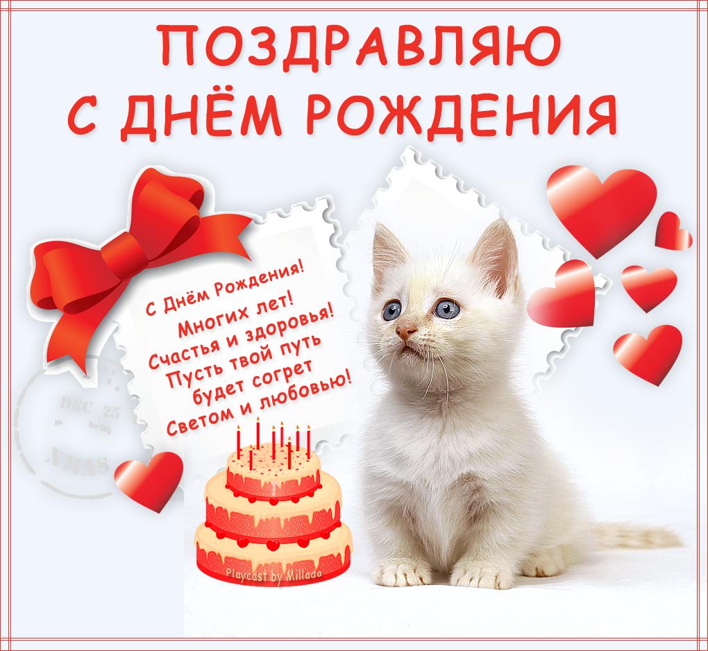 поздравление с днем рождения с котенком открытки полны