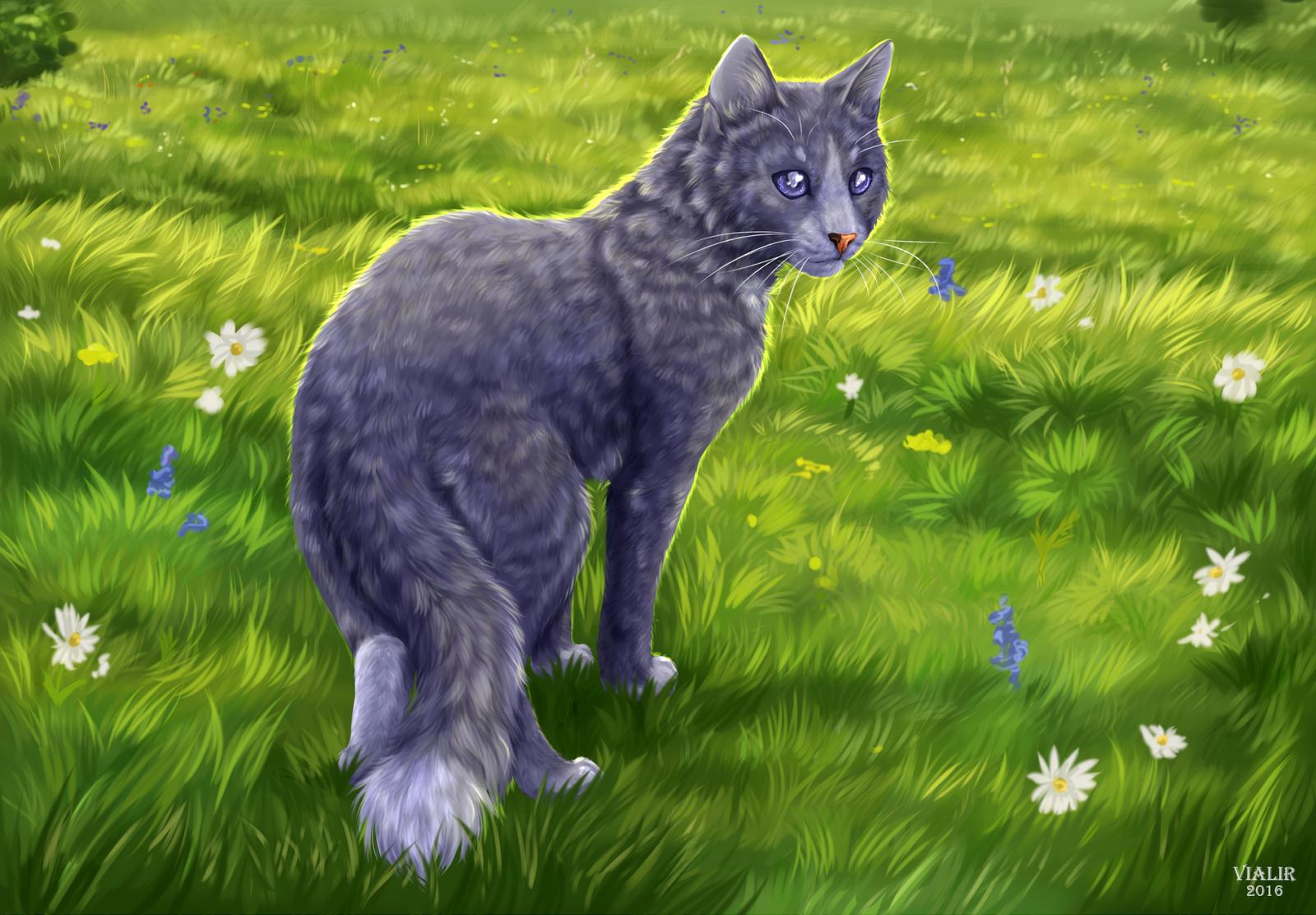 пинта коты-воители тучезвезд картинки радостью хочу