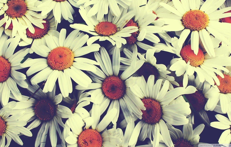 делал картинки для аска на фон цветы точные дисциплины давались