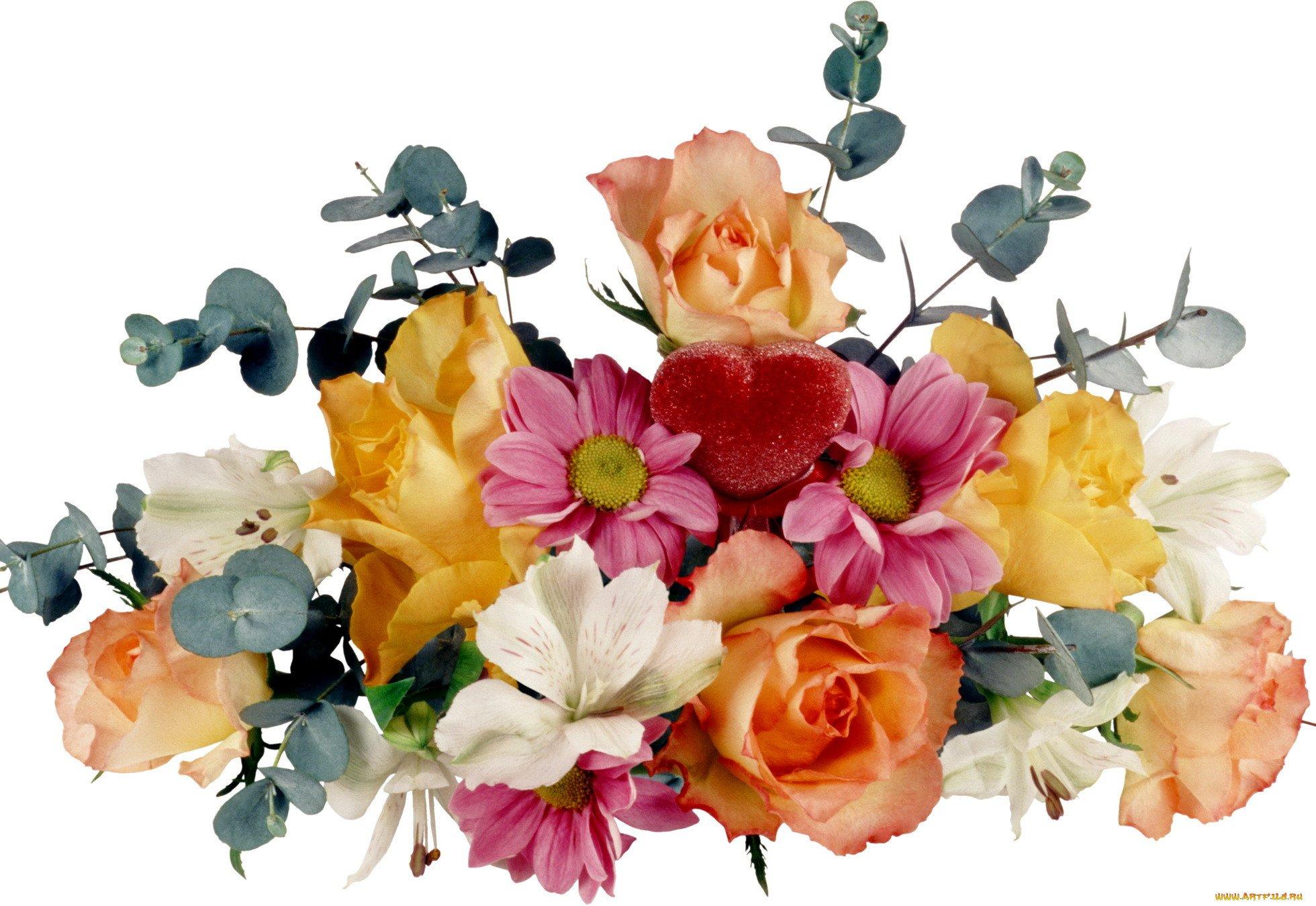 Картинки цветы пнг красивые