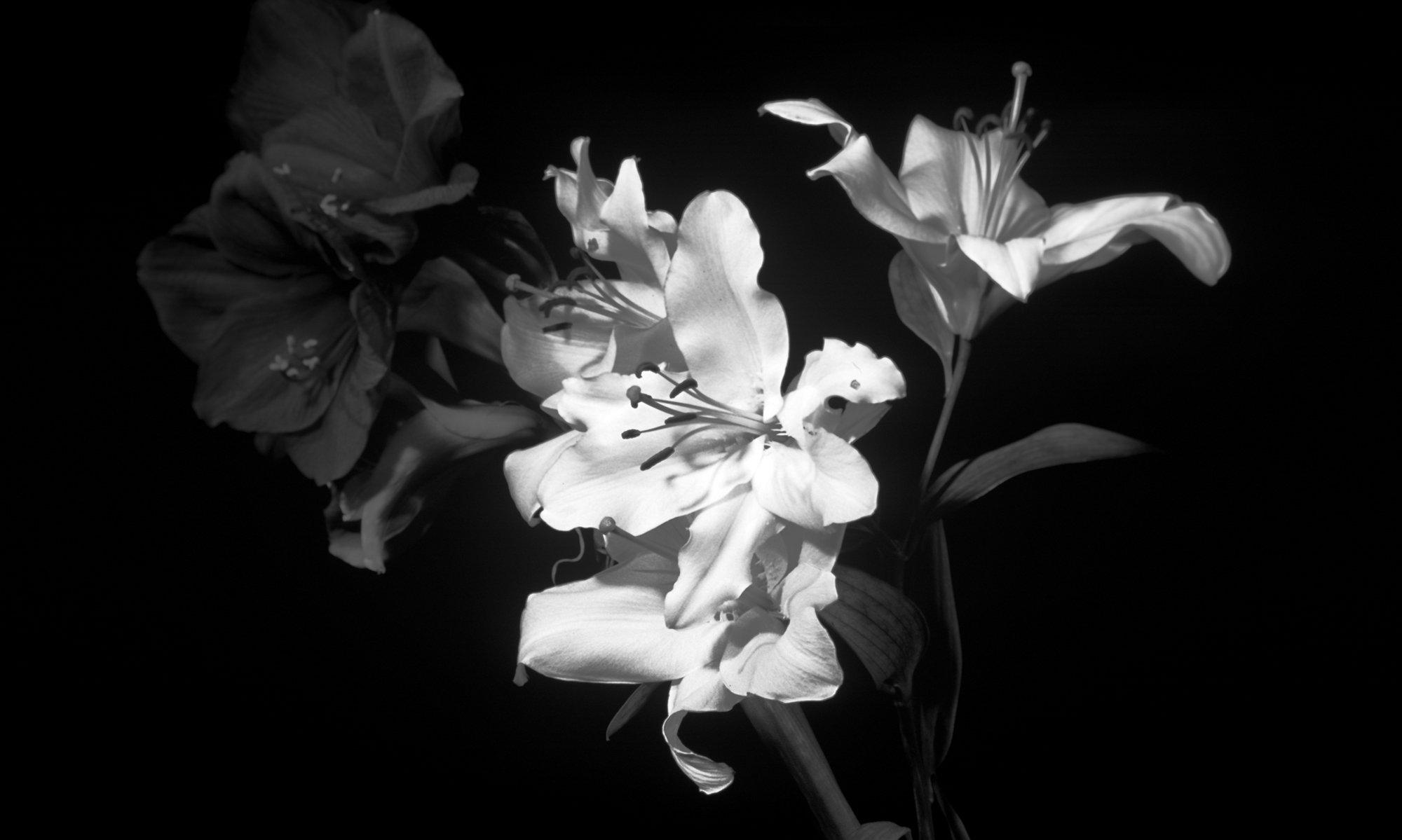 картинка с цветком на черном фоне то
