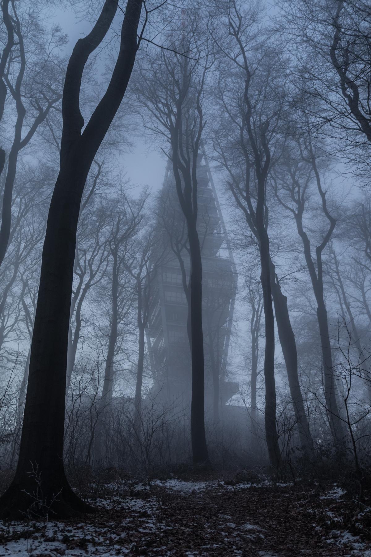 Картинка темный страшный лес