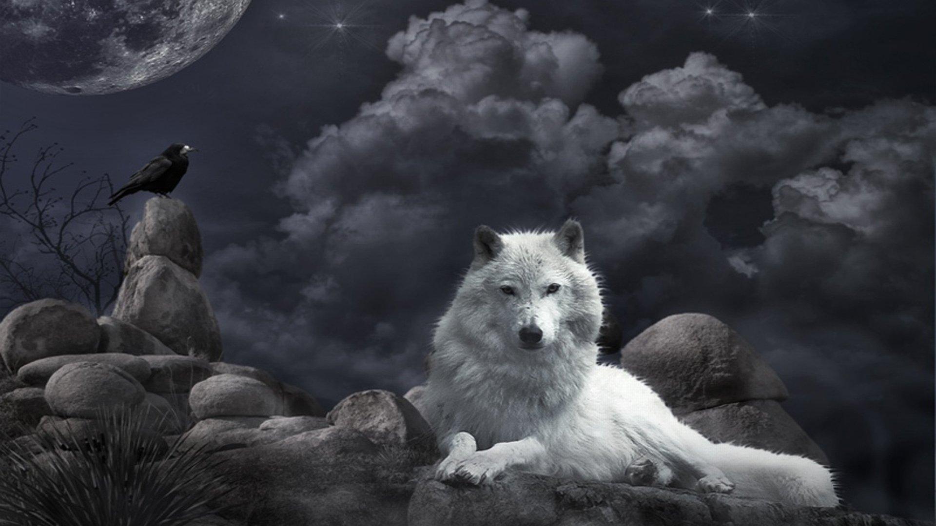 Цветы фото волки