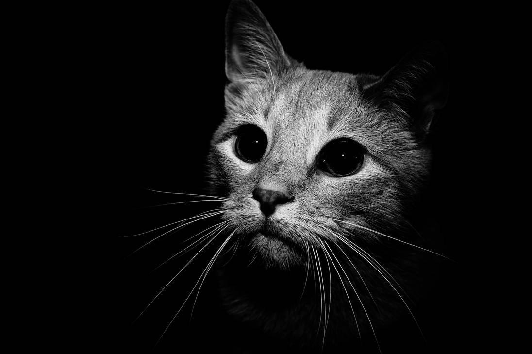 Картинки котов с черным фоном
