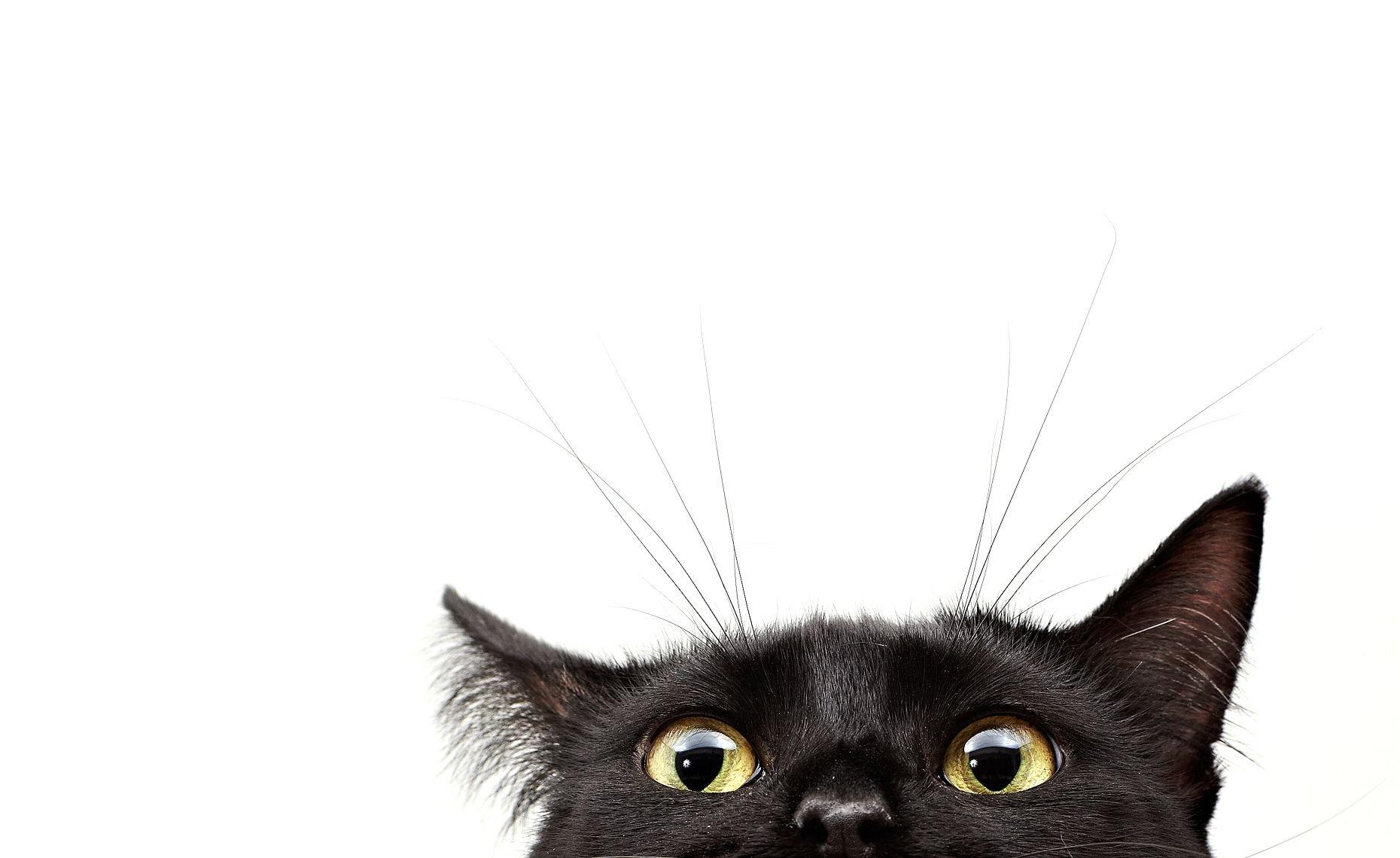 Картинки котик выглядывает