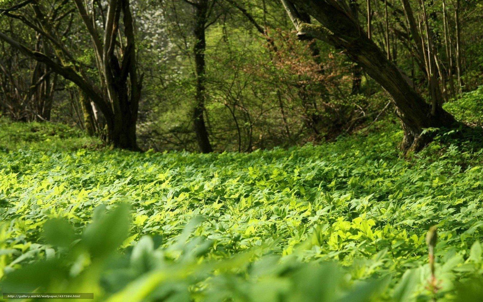 Жк зеленый бор зеленоград фото почему должны