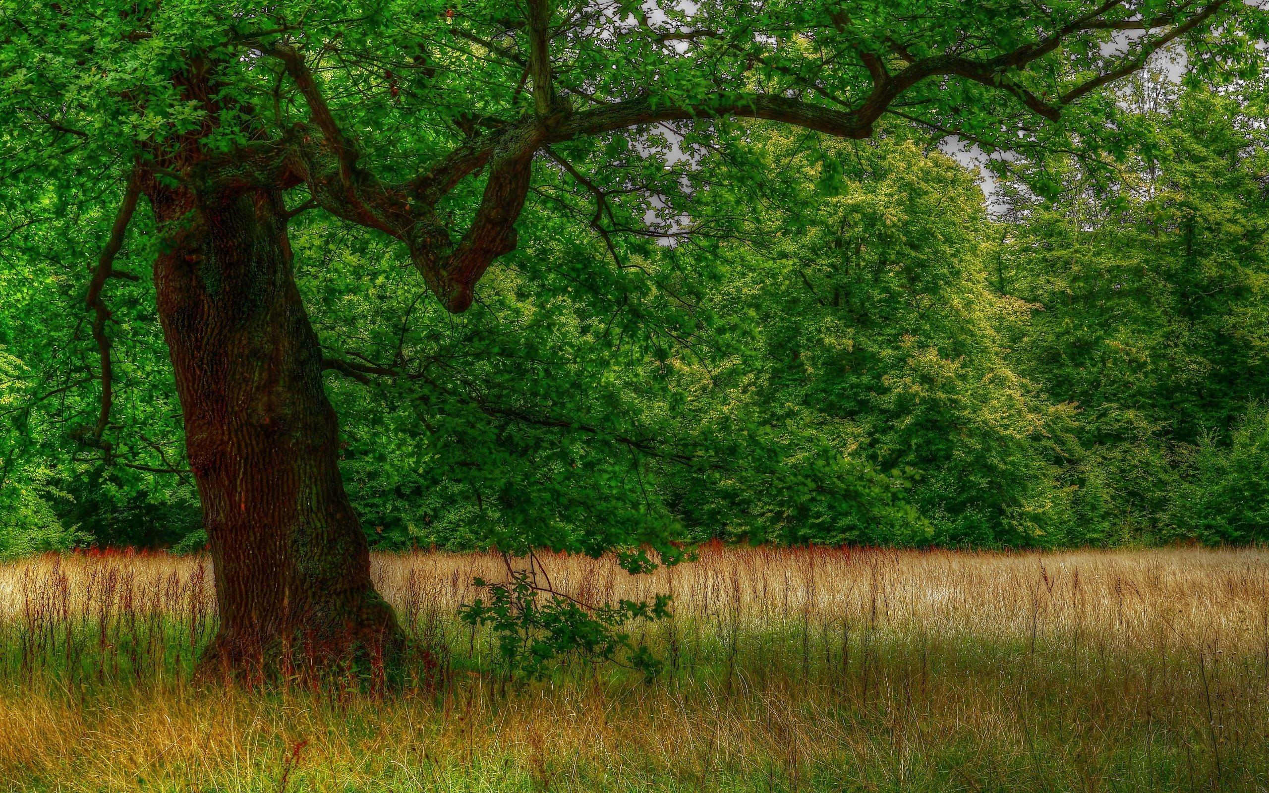 Деревья и полянка картинки