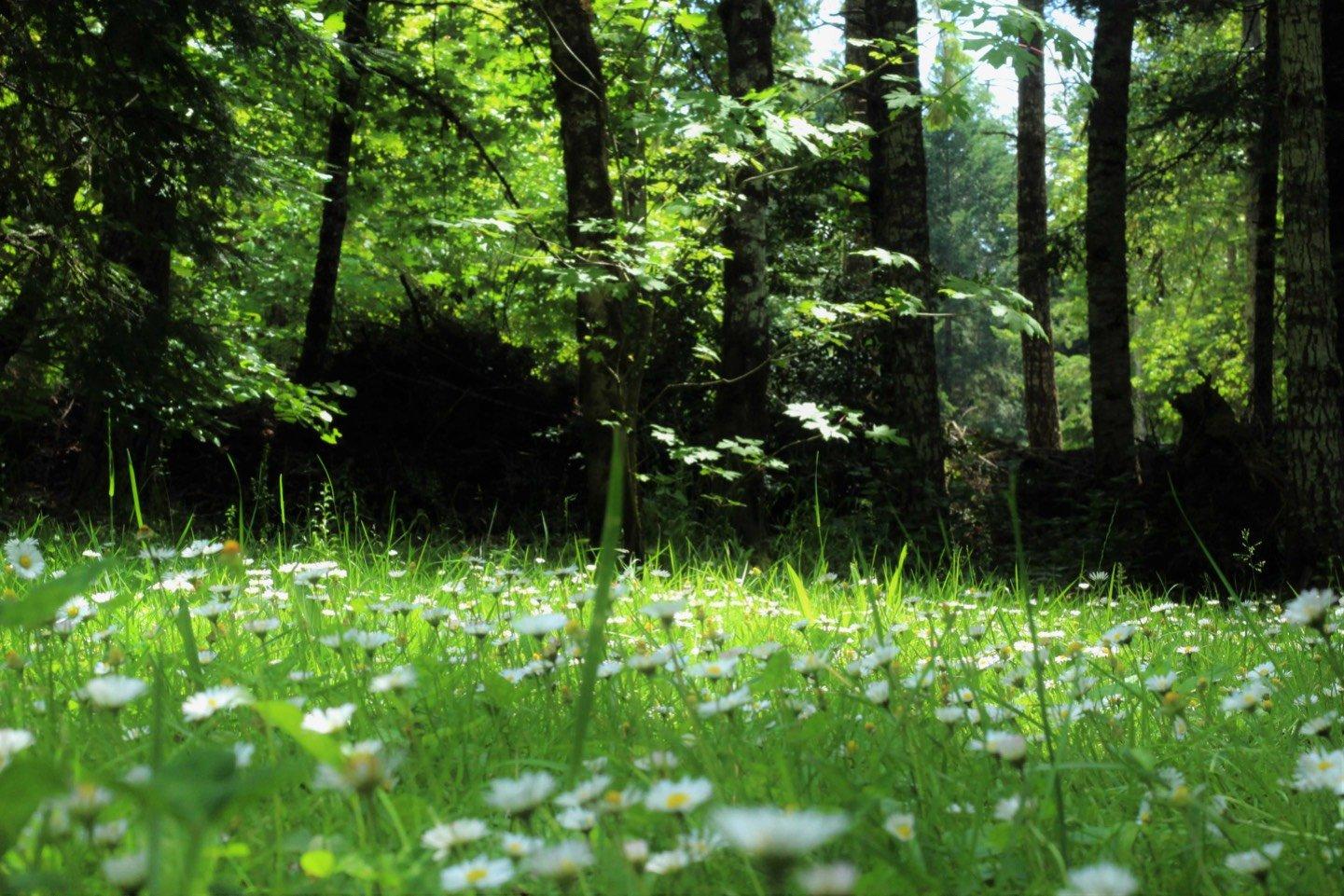 просят на зеленой полянке фото совсем